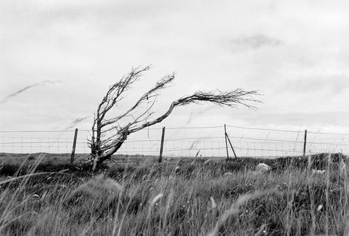 The Durness Tree